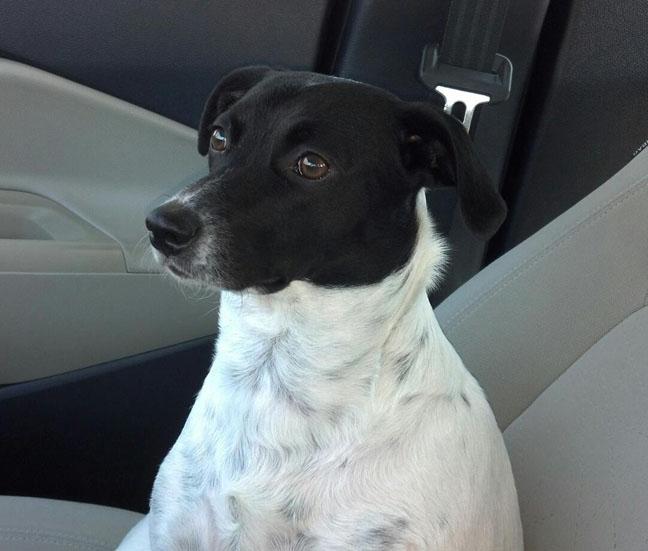 Lolita in Jake's car 010613-1